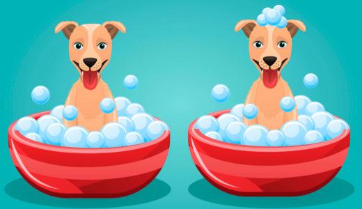 ゴールデンレトリバー オペル(Golden Opel)-犬のお風呂事情